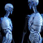 Funkcje, stany chorobowe, badanie wątroby
