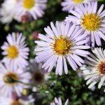 Aranżacje kwiatowe – kosze i donice