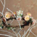 Rewelacyjne kwiaty